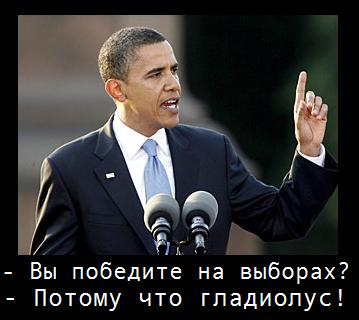 Обама гладиолус -4