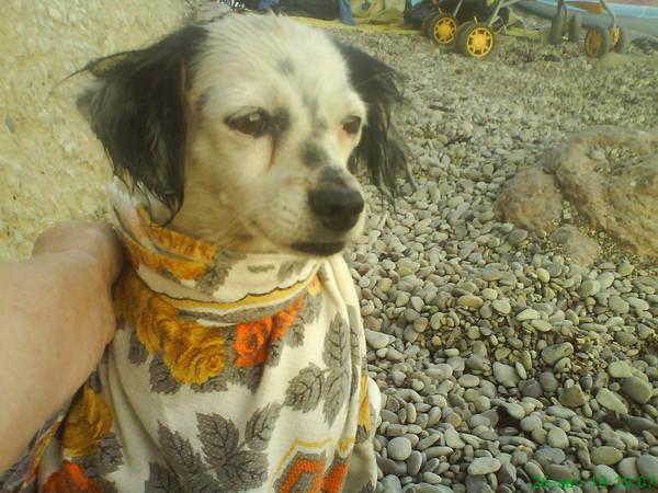 Вот эта дворняжка Цуца и была единственной любовью моего пса.