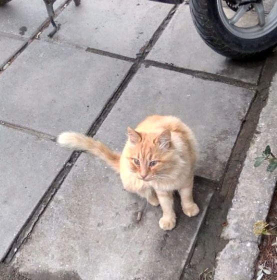 Кот Рыжий на прогулке у дома родного.