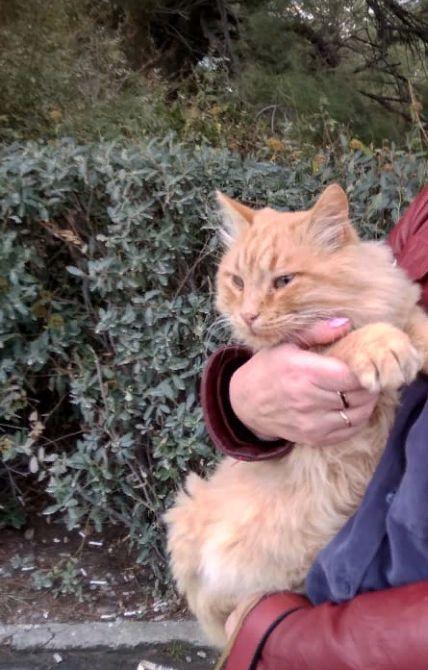 Кот Рыжий на руках у прекрасной дамы.