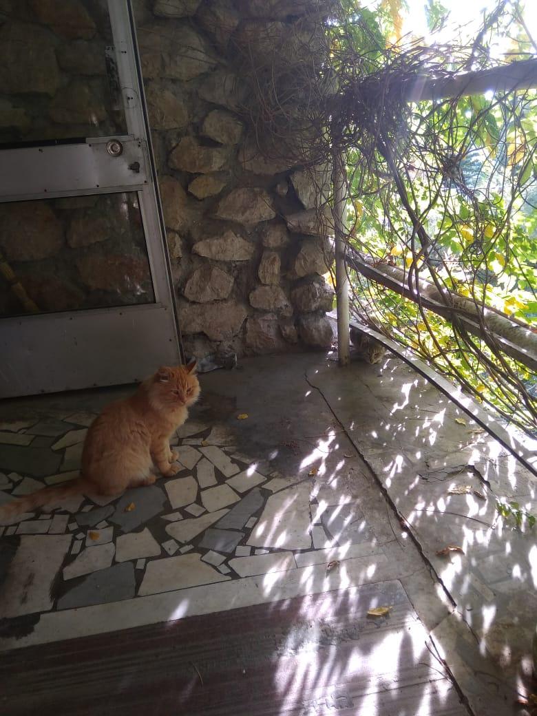 Кот Рыжий и его верная подруга.
