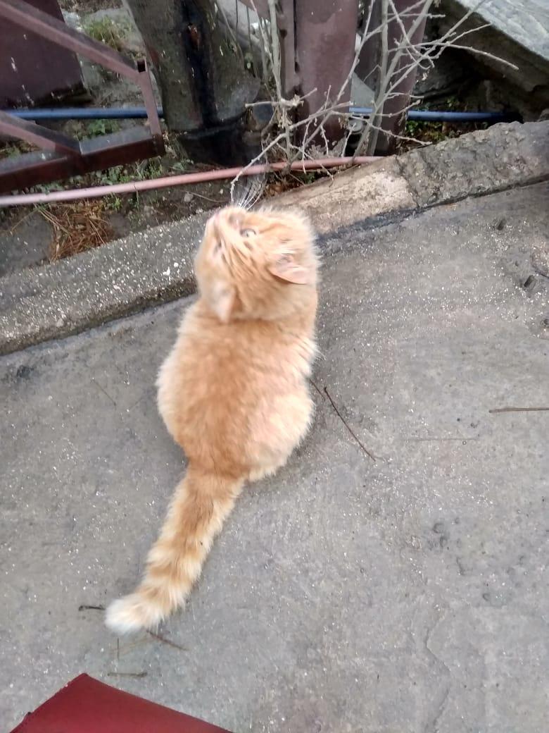 Котик Рыжий.