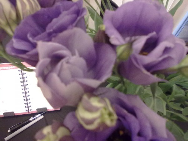 lisianthus-close-up