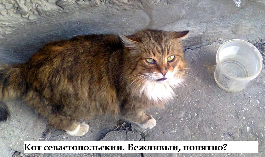 Кот опасный