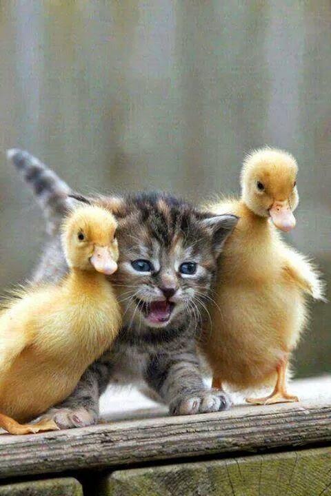 Beautiful friends..........fatma,,,,,,,