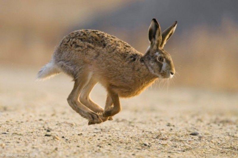 х. зайца