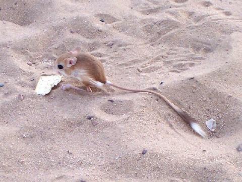 х. мыши