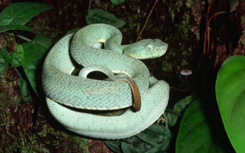 х.змеи