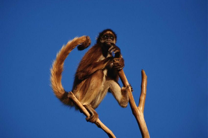 х.обезьяны