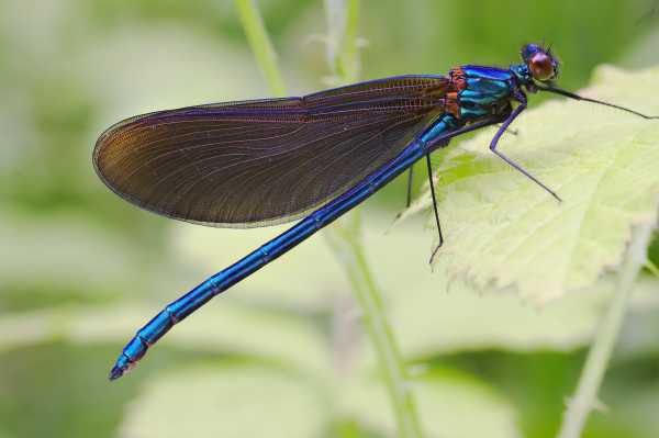 хвост насекомого