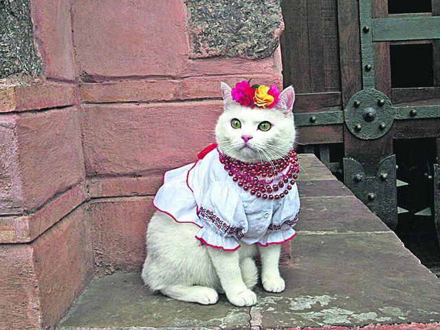 кошка в вышиванке