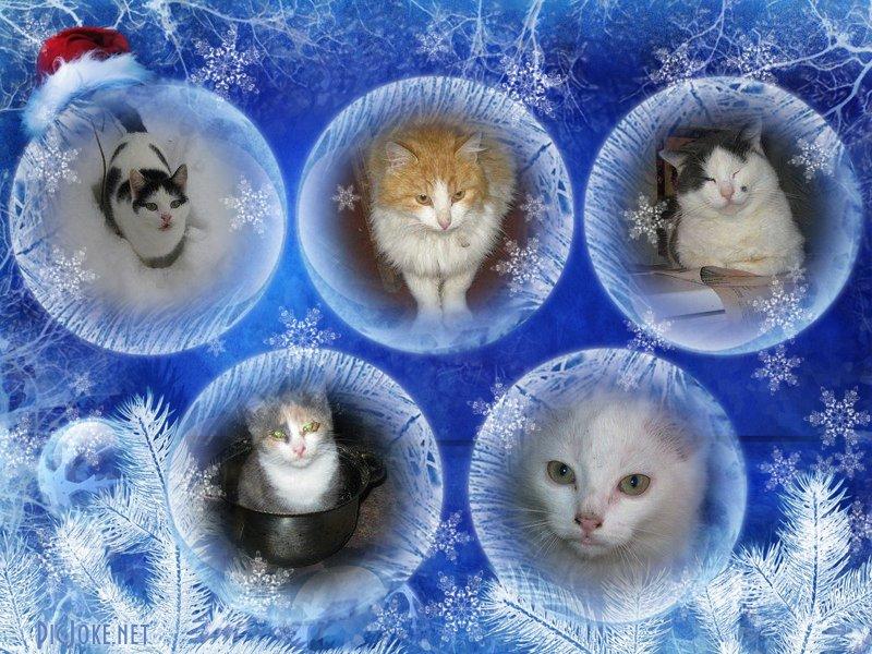 коты в шарах