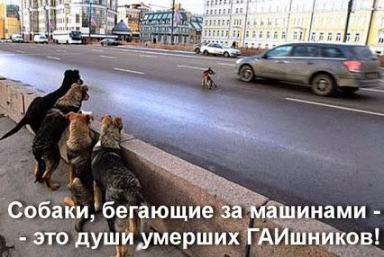 собаки бег