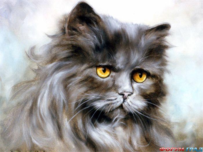 кошка 9