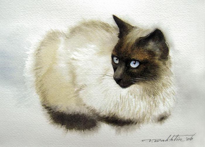 кошка5