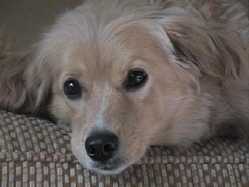 Chrissy, my puppy