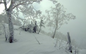 japanese-snowstorm