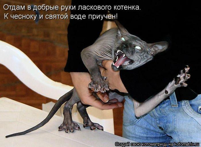 kotomatrix_09