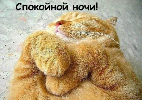 1348990672_dobroy_nochi7-11