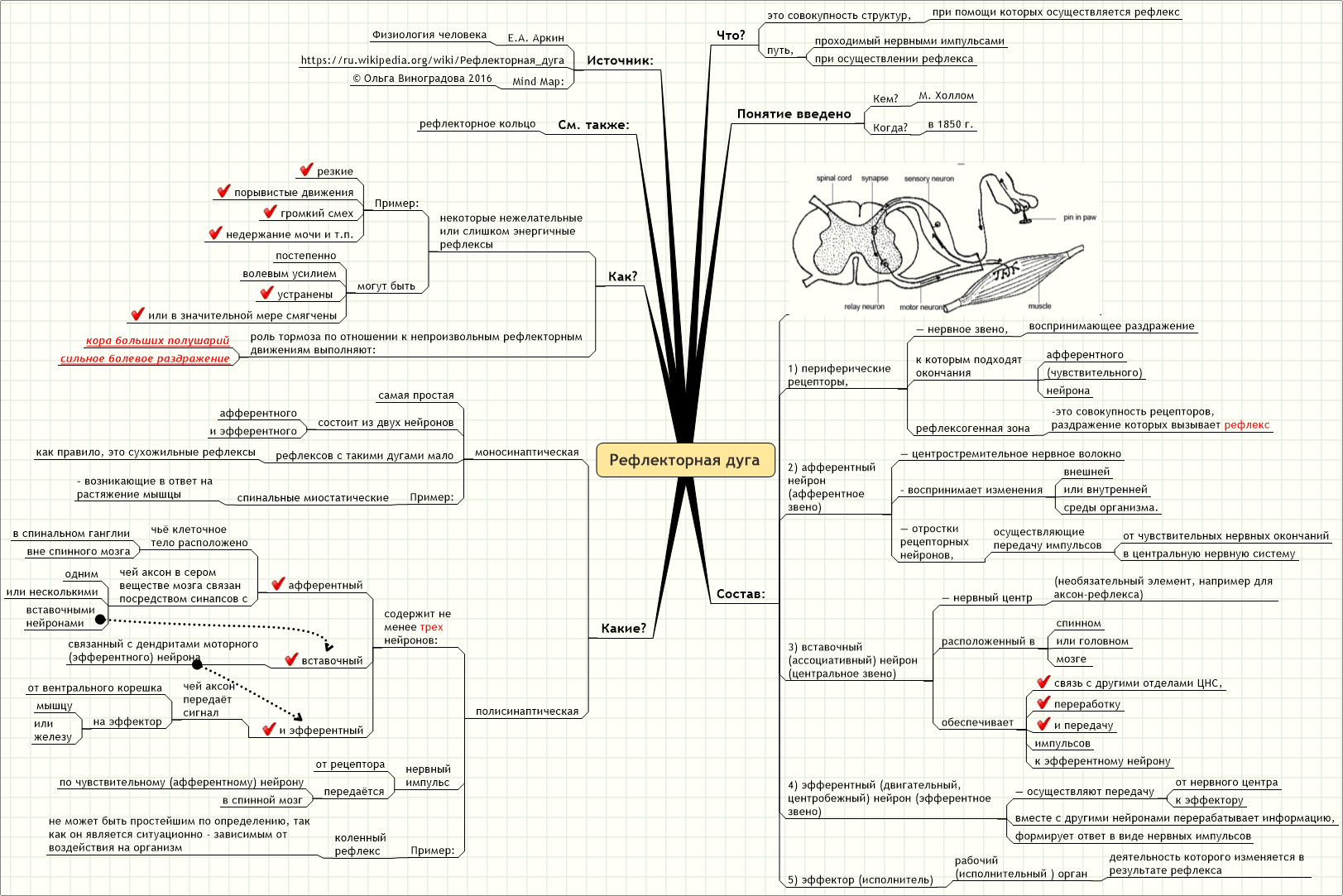 Схема движения нервного импульса по рефлекторной дуге