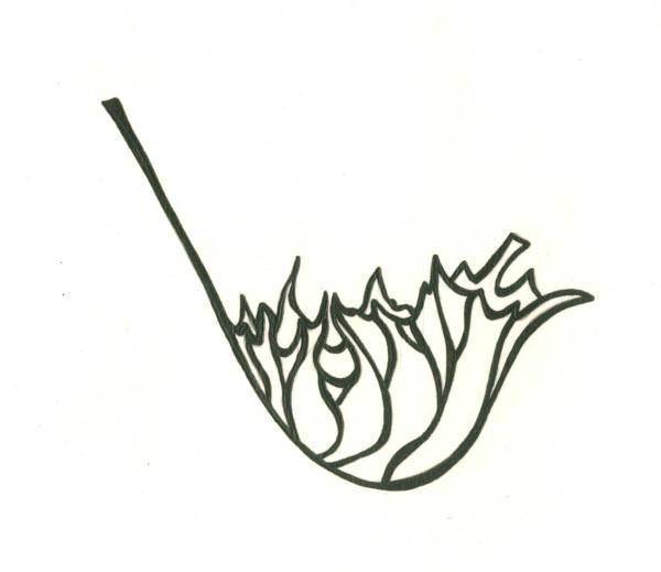 кленовый лист2