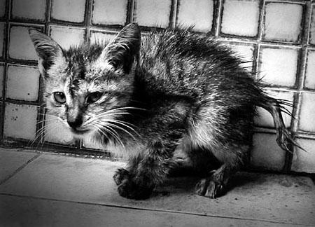 жалкий котёнок