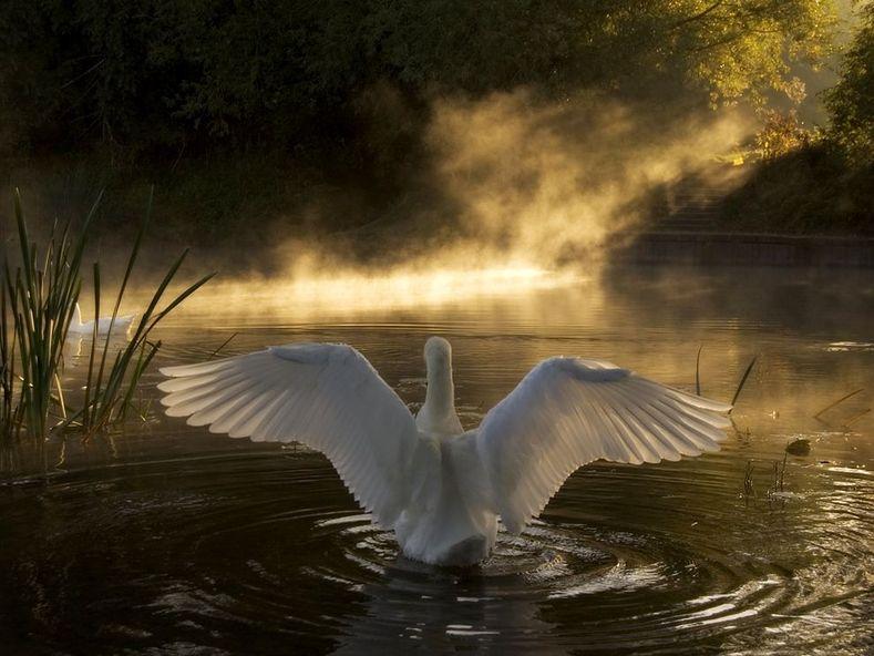 1310087513_swan-river-avon_3584_990x742
