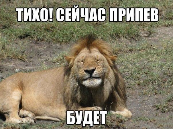 припев