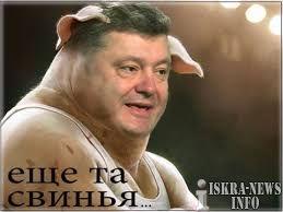 порош свинья