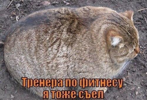 Коты с мускулами