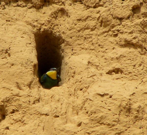 щурка гнездо