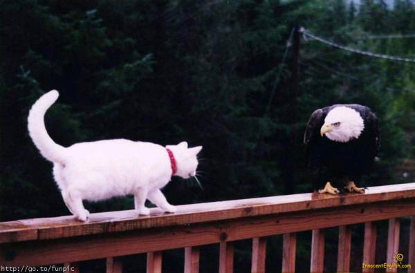 cat-eagle-balcony-img104