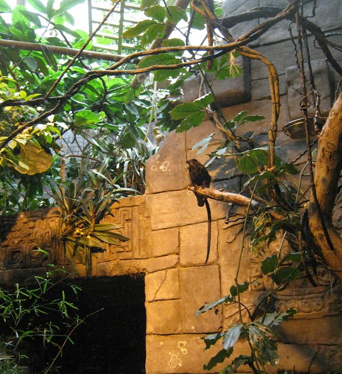 обезьяны-2
