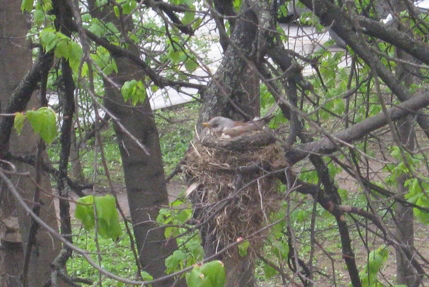 То самое гнездо
