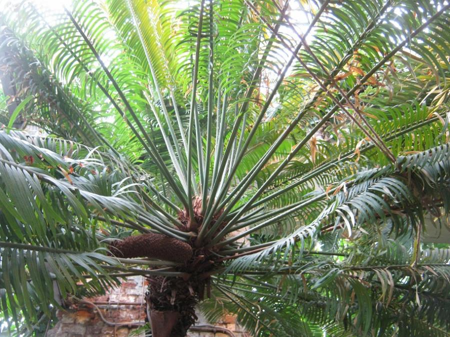 пальмы-2