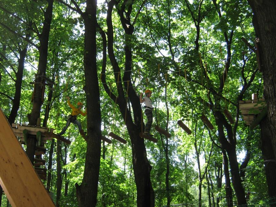 дети на деревьях