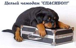 чемодан спасибо