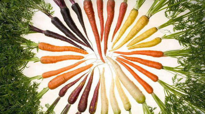 разноцветие моркови