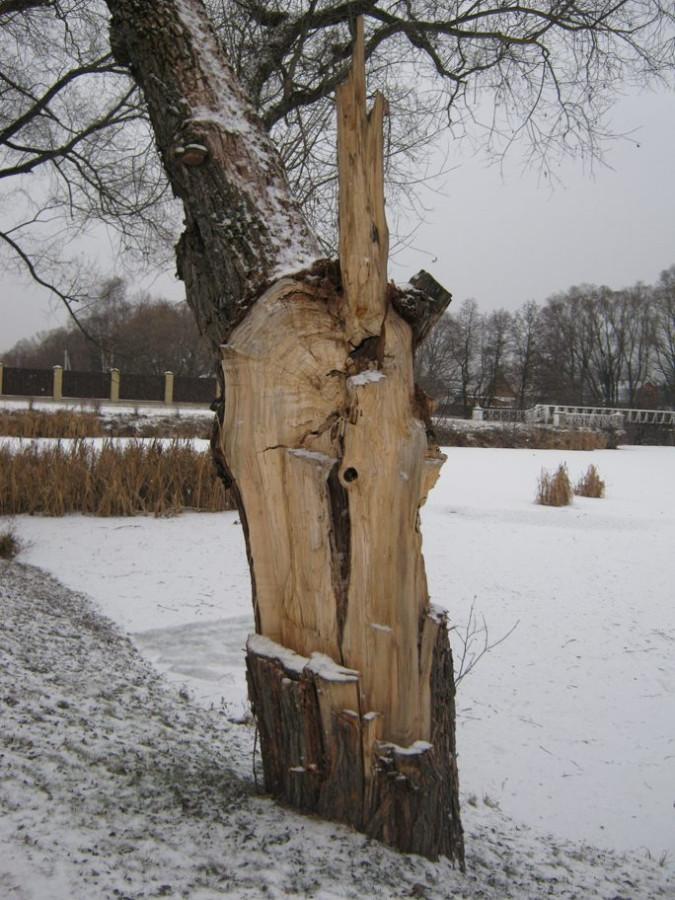 дерево-1