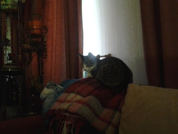 первое что вижу котик