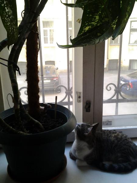котик на подоконнике утро