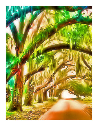 Dreaming of Savannah
