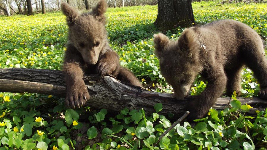 нем особый полугодовалый медвежонок фото для