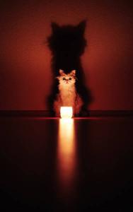 Кот-с-Лампой