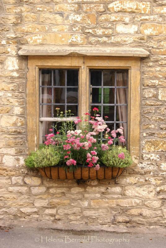 Подборка: цветы в ящиках за окном