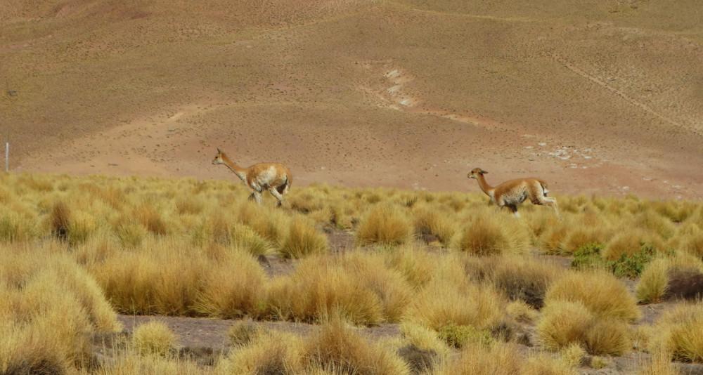 Самостоятельное путешествие  двух  пенсионеров по Чили и Аргентине.