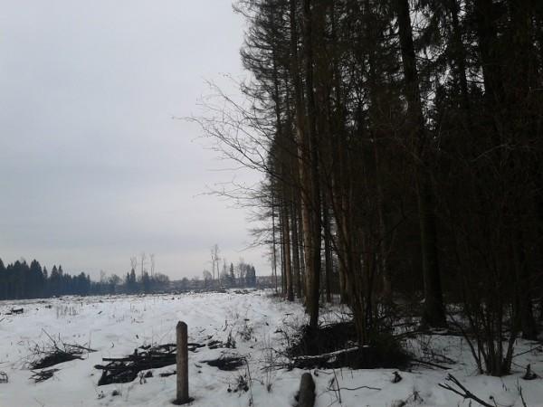 Так сегодня выглядит лес вокруг
