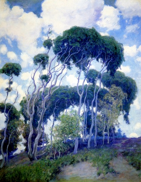 laguna-eucalyptus-1917
