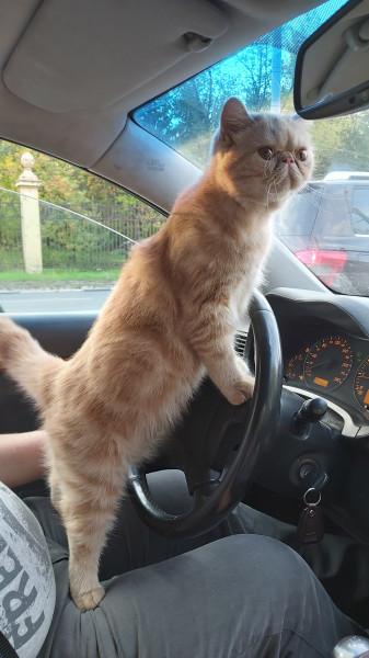 В любой непонятной ситуации пости котиков)