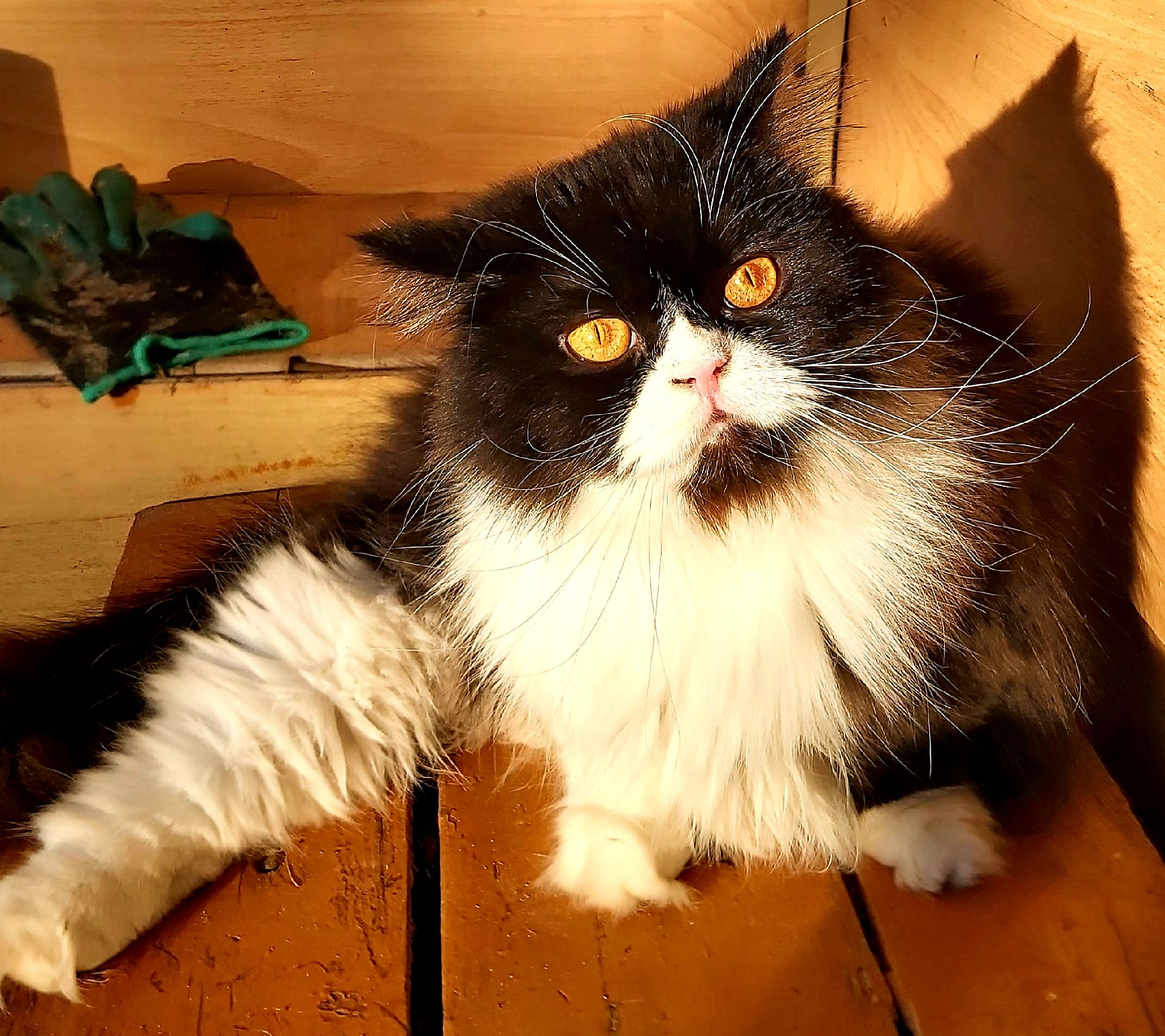 кошки не похожи на людей...